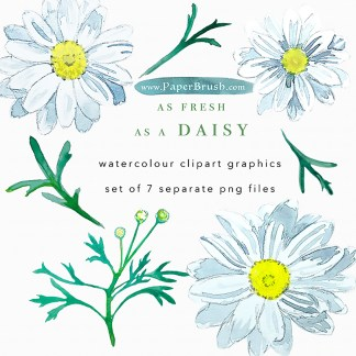 Daisy clipart bundle