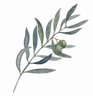 All things OLIVE
