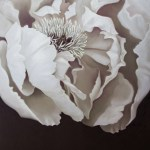 Pastel painting of white peony on dark background