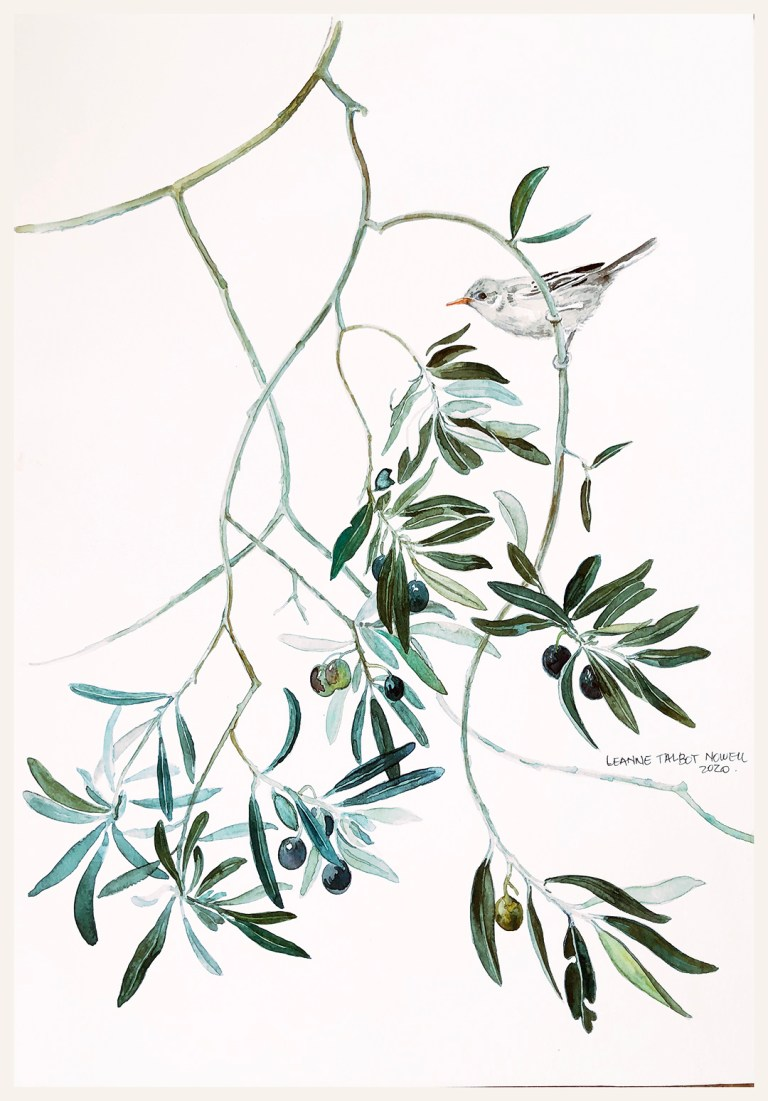Watercolour olive branch and bird