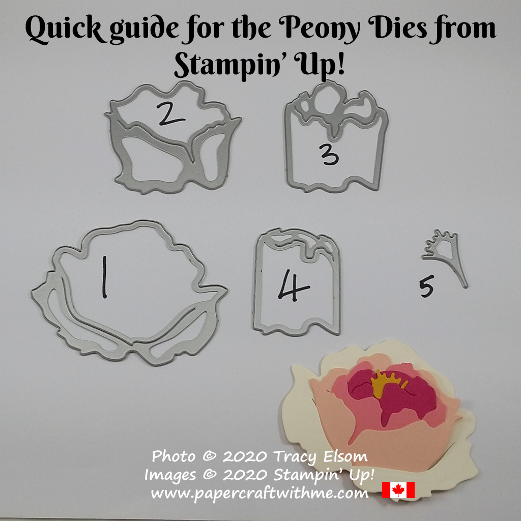 Visual guide to assembling the Peony Dies from Stampin' Up! #papercraftwithme