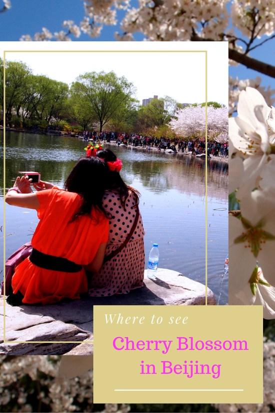 Cherry blossom beijing