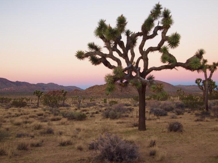 Sun Setting Joshua Tree National Park