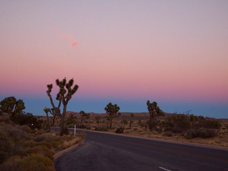 Pink Sunset Joshua Tree National Park