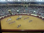 Portuguese bull fighting