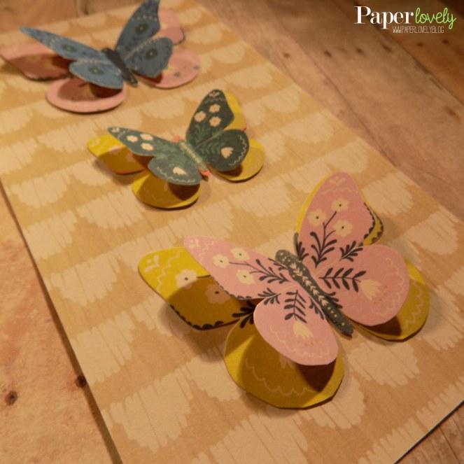 butterfly dim