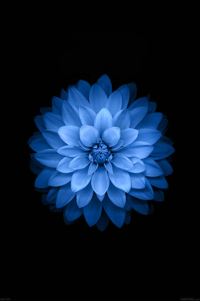 Air Anime Wallpaper Ac99 Wallpaper Apple Blue Lotus Iphone6 Plus Ios8 Flower