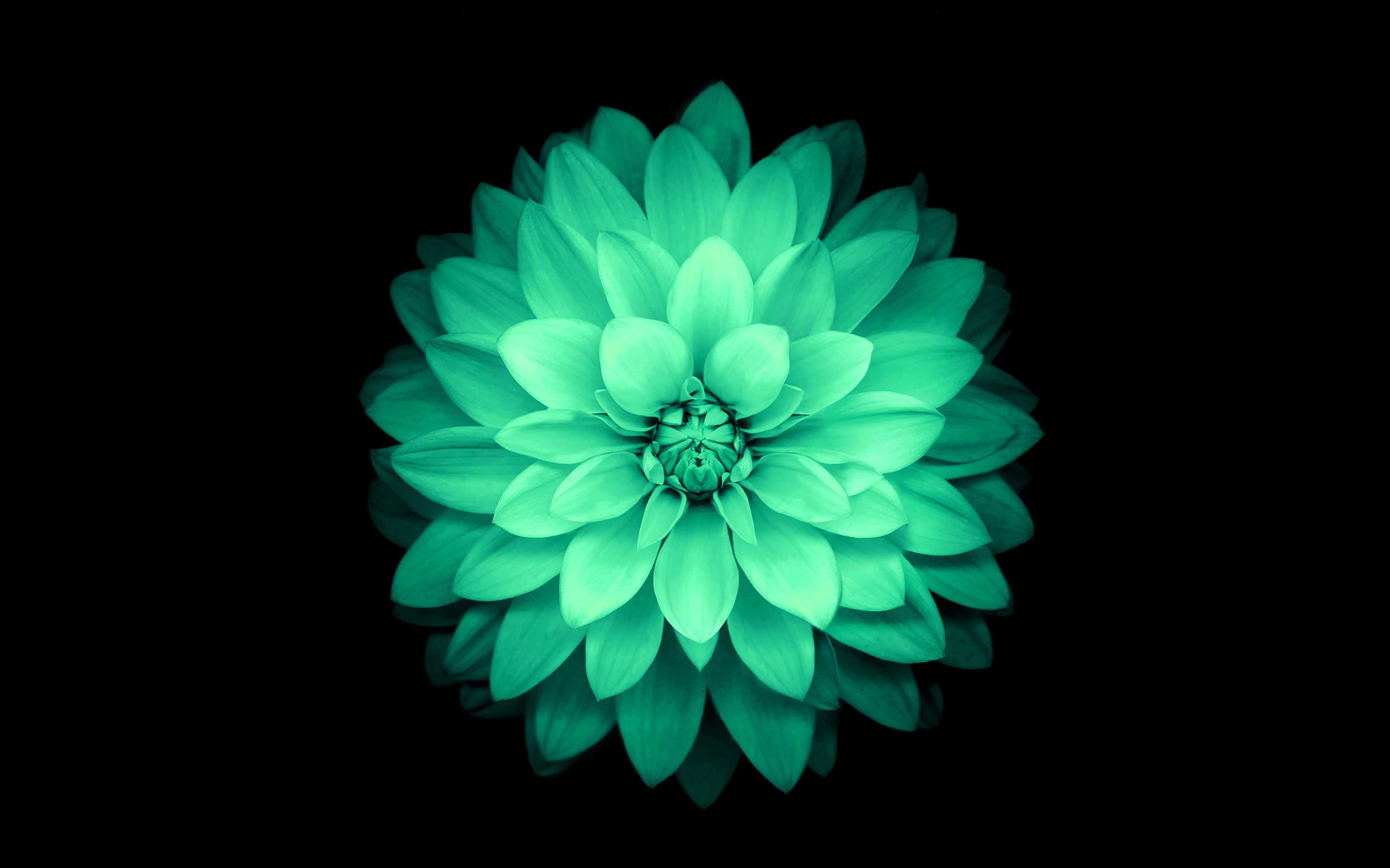 Cute Animal Summer Wallpaper Pictures Ad76 Apple Green Lotus Iphone6 Plus Ios8 Flower Papers Co