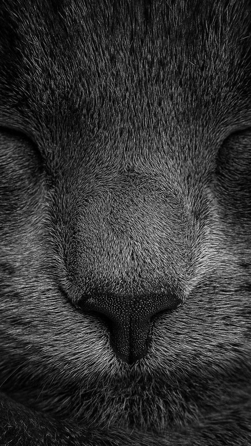 Iphone 7 Wallpaper Cat