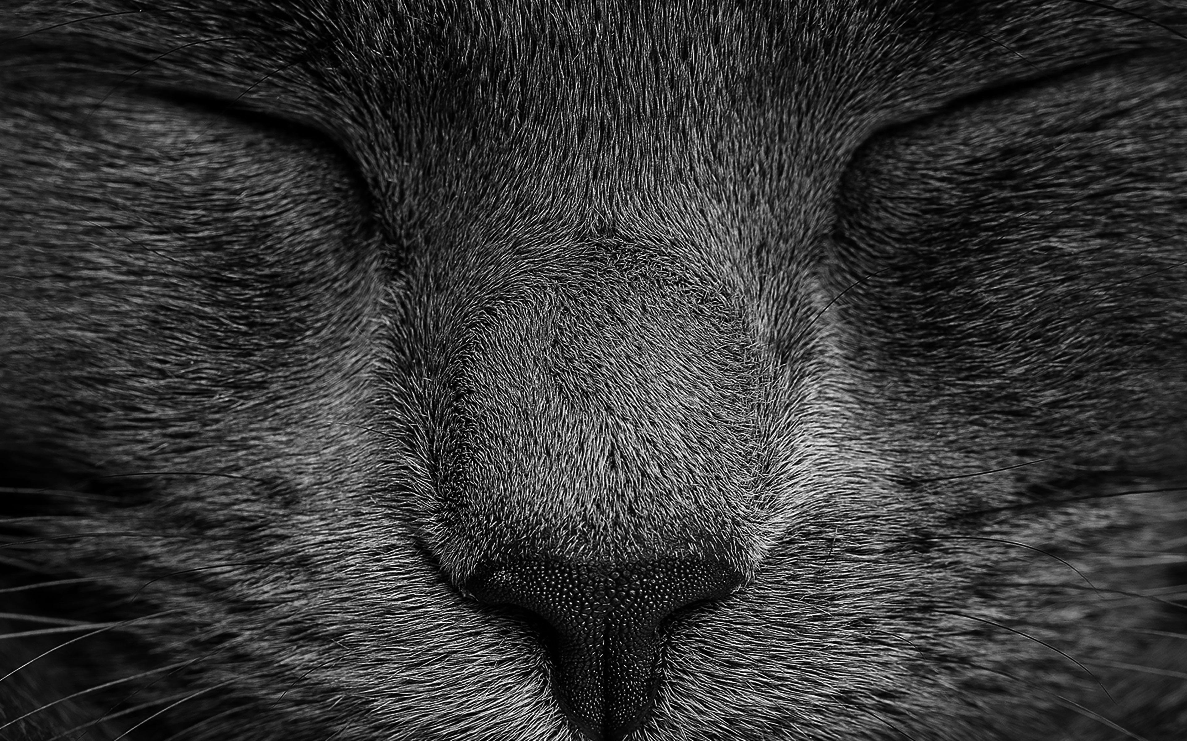 Cute Black Cat Iphone Wallpaper Ae80 Sleeping Black Cat Zoom Nature Wallpaper