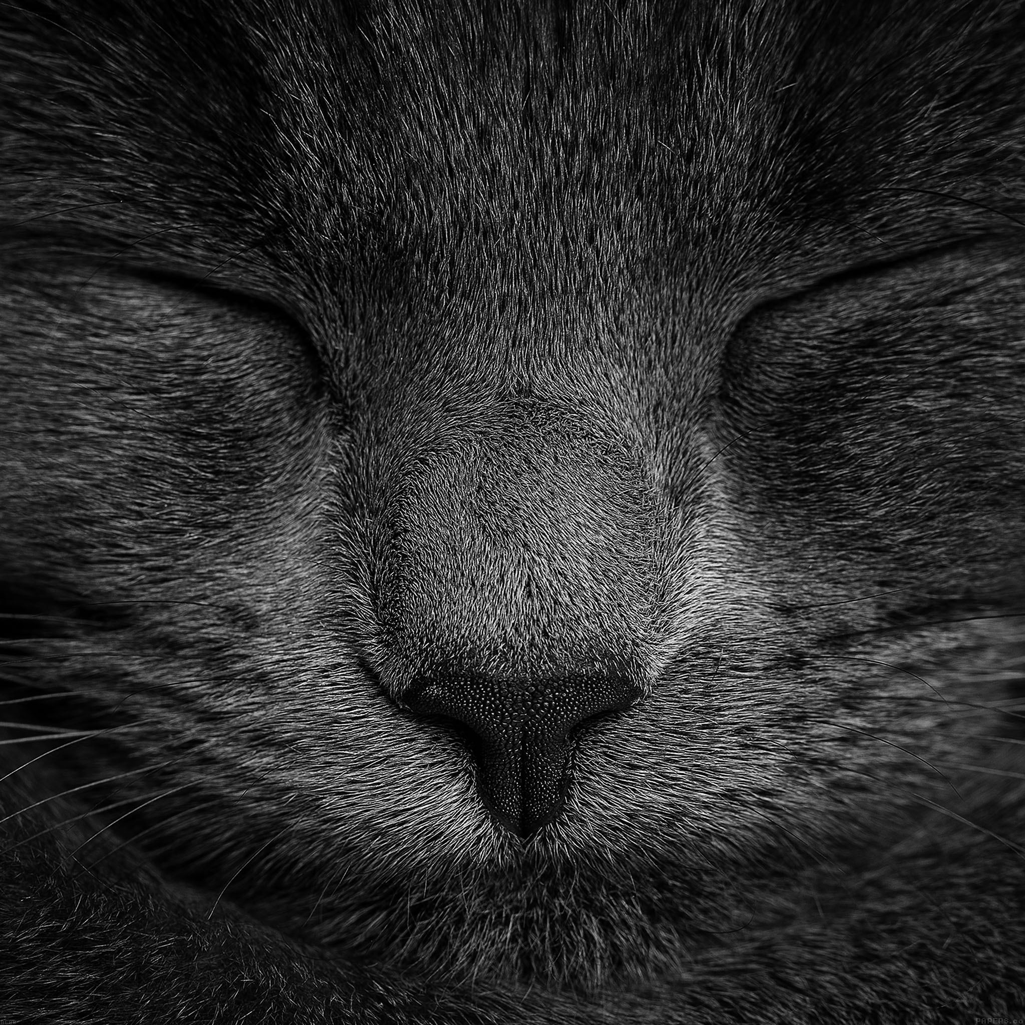 Apple Logo Wallpaper Iphone 4 Ae80 Sleeping Black Cat Zoom Nature Wallpaper