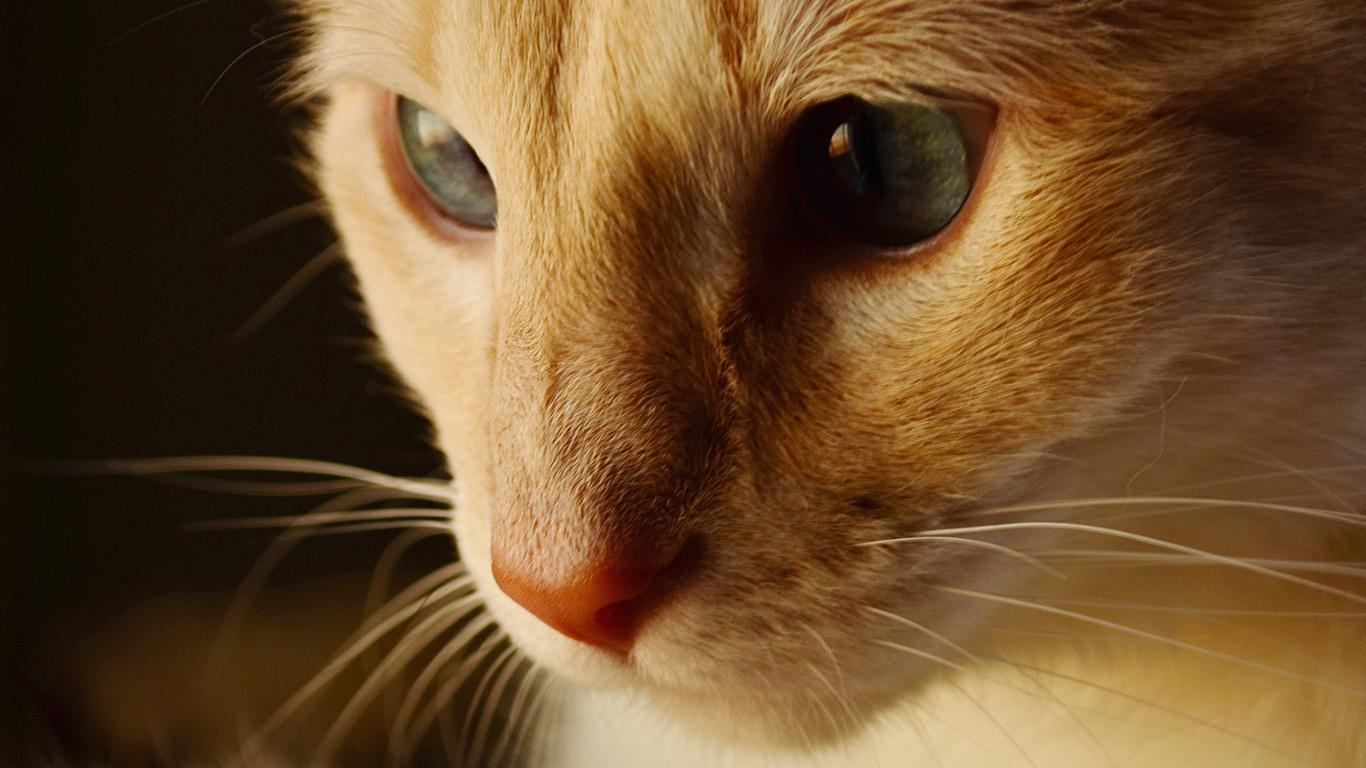 Cute Cat Face Wallpaper Wallpaper For Desktop Laptop Aq29 Cat Face Cute Orange