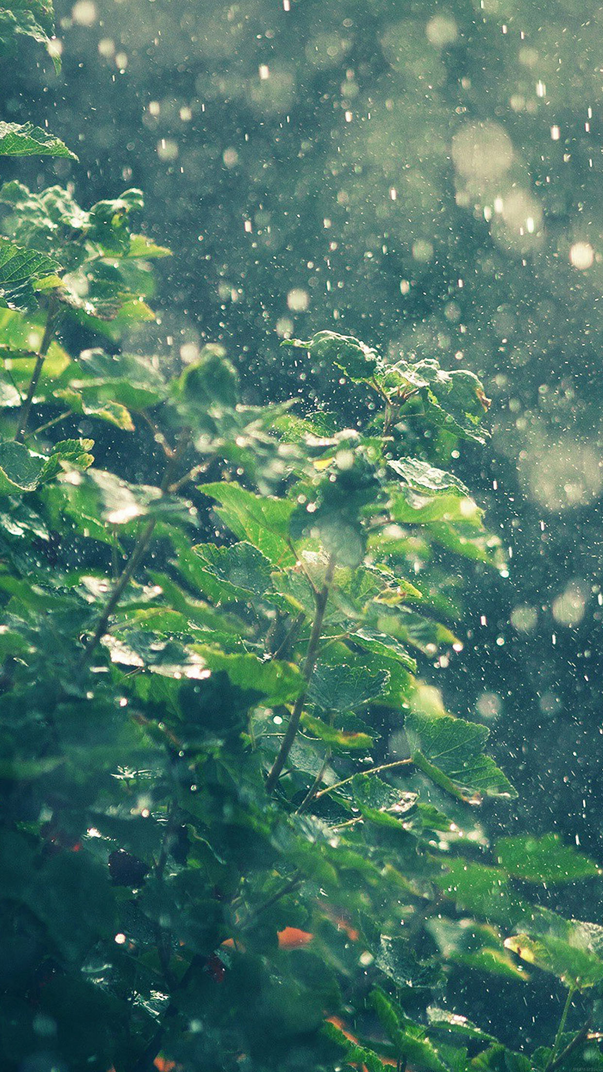 Cute Wallpapers For Phone Screen Ma56 Raining Summer Sunny Flower Nature Papers Co