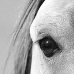 Wallpaper For Desktop Laptop Mb29 Wallpaper Eye Of Peace B Horse