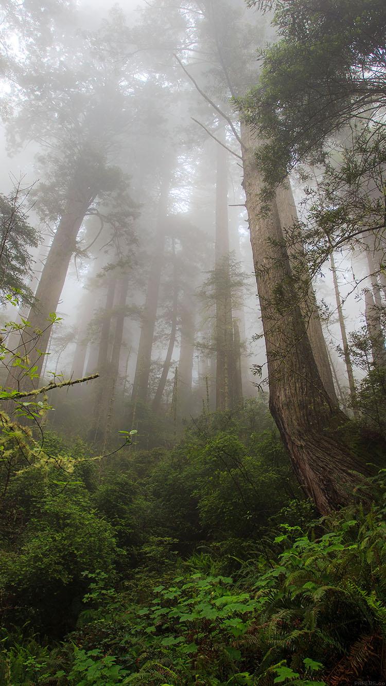 Dark Wood Iphone Wallpaper Nature