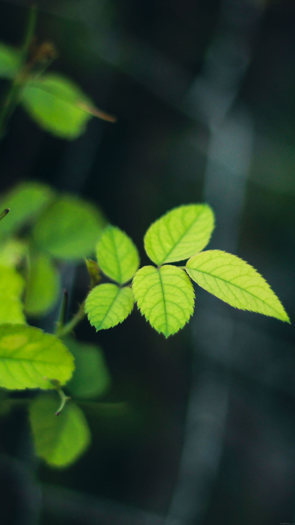 Cute Hd Wallpapers For Phone Mc00 Wallpaper Greenish Flower Leaf Papers Co