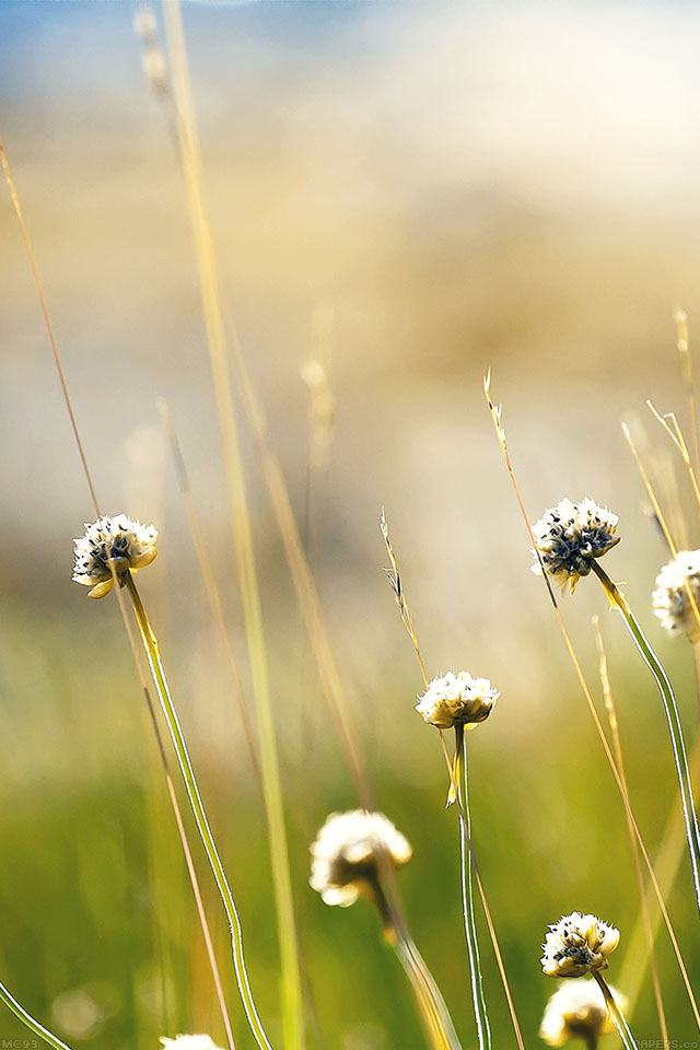 Note 8 Hd Wallpaper Mc93 Wallpaper Flower Dandelion Green Nature Papers Co