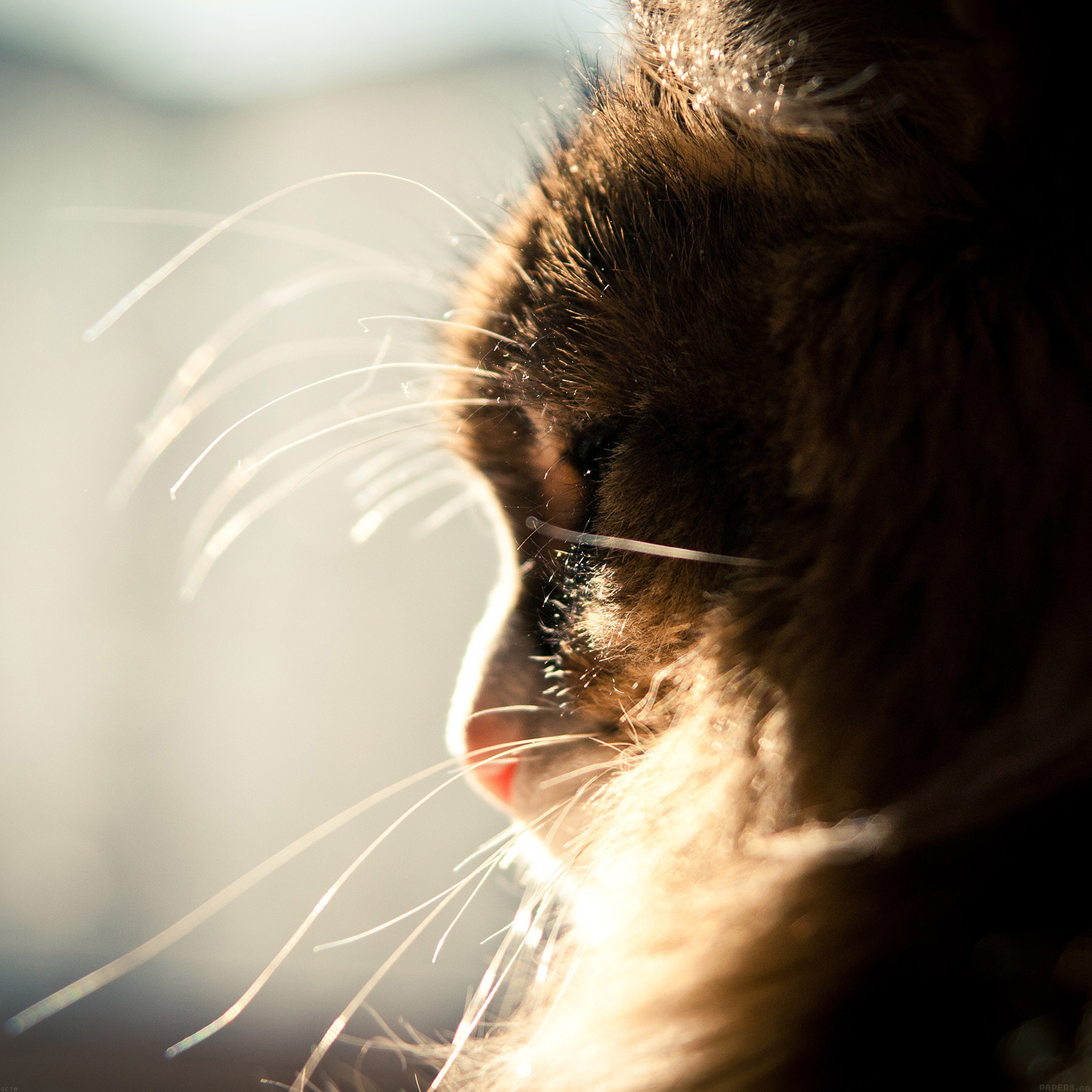 Cute Cats Wallpapers For Iphone Mi07 Cat Looking Out Window Animal Cute Papers Co