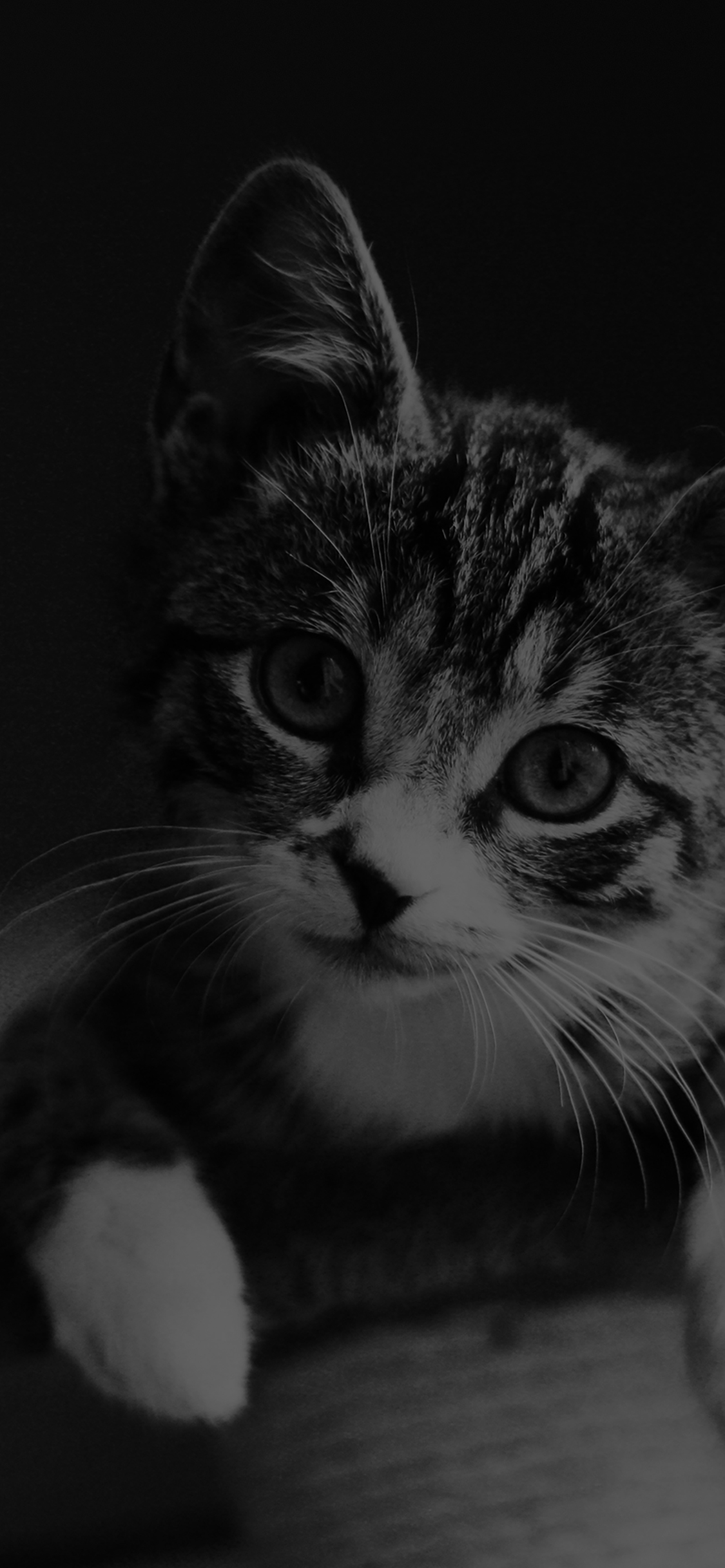 Wallpaper Hd Nexus Mi36 Cute Cat Look Dark Bw Animal Love Nature Wallpaper