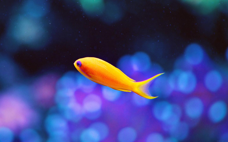 Cute Lollipop Wallpaper Wallpaper For Desktop Laptop Mj49 Cute Fish Nemo Ocean