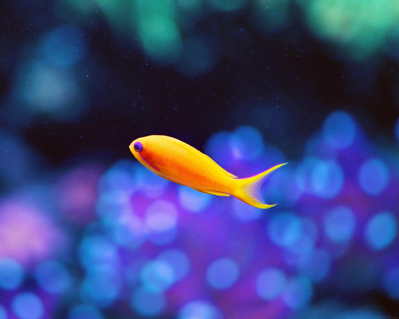 Wallpaper Fish Iphone Mj49 Cute Fish Nemo Ocean Sea Animal Nature Wallpaper