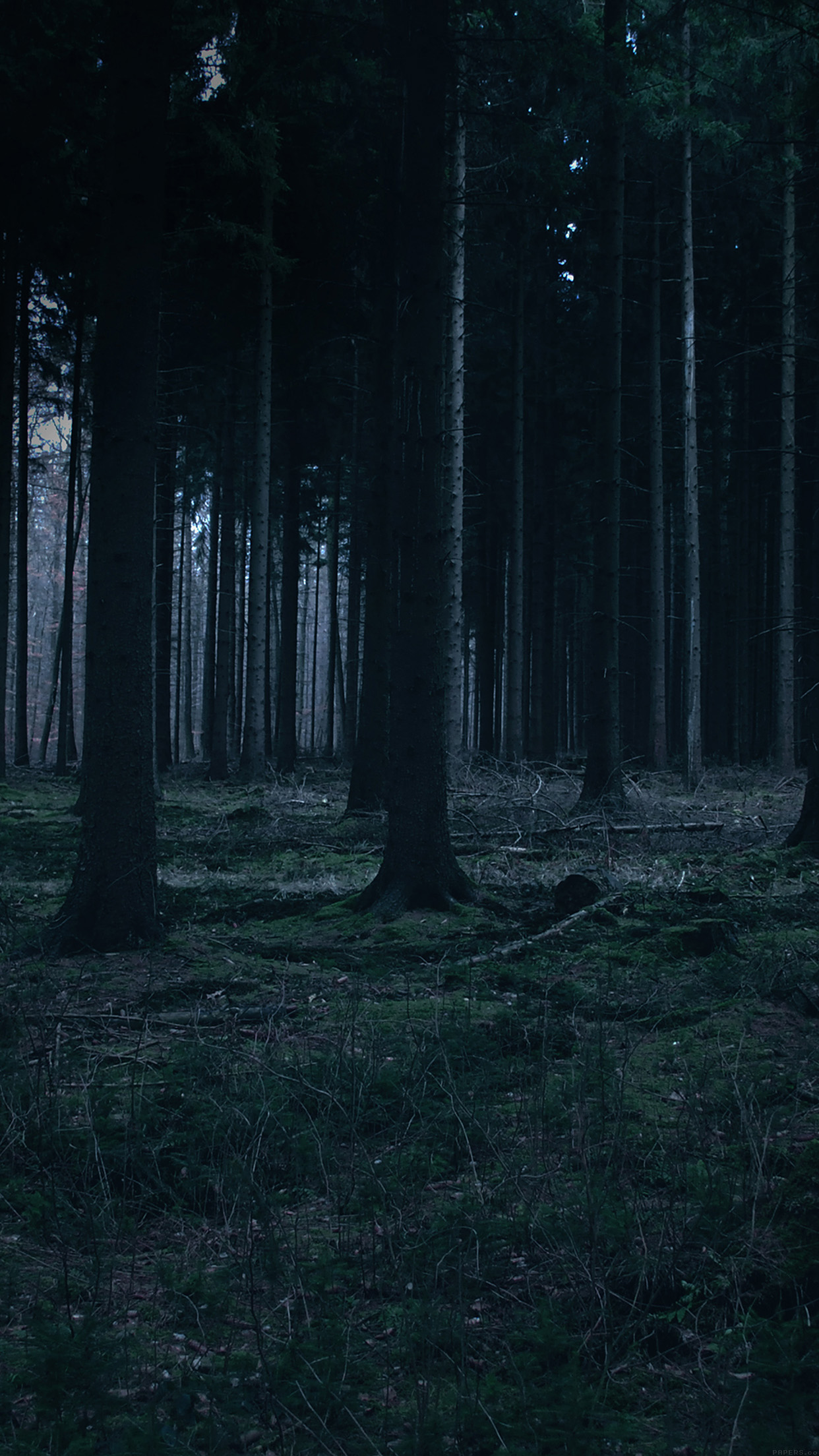 You can return the item for any reason in new and unused. mj52-forest-dark-night-trees-nature - Papers.co
