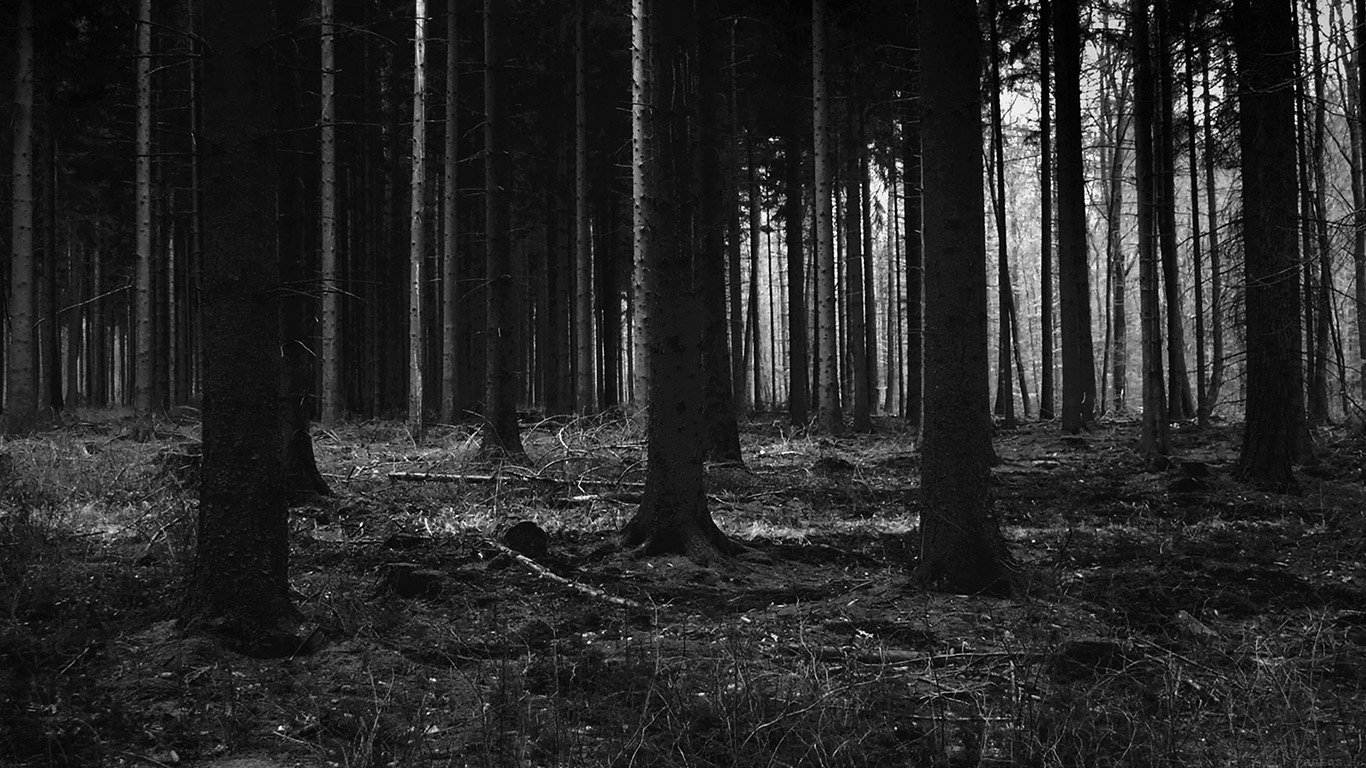 Mj53 Forest Dark Scary Night Trees Nature