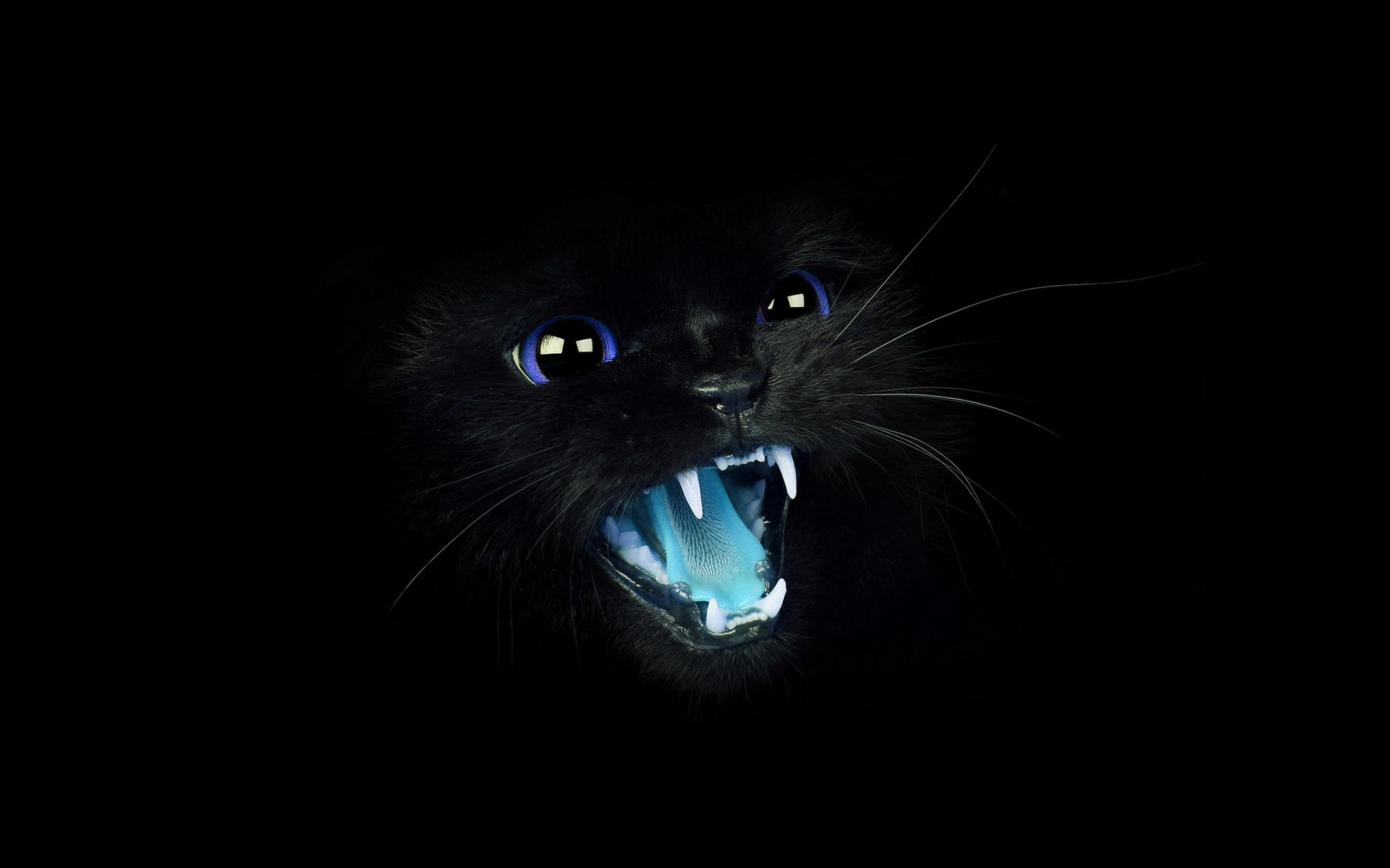 Fall Kitten Wallpaper Mj55 Black Cat Blue Eye Roar Animal Cute Papers Co