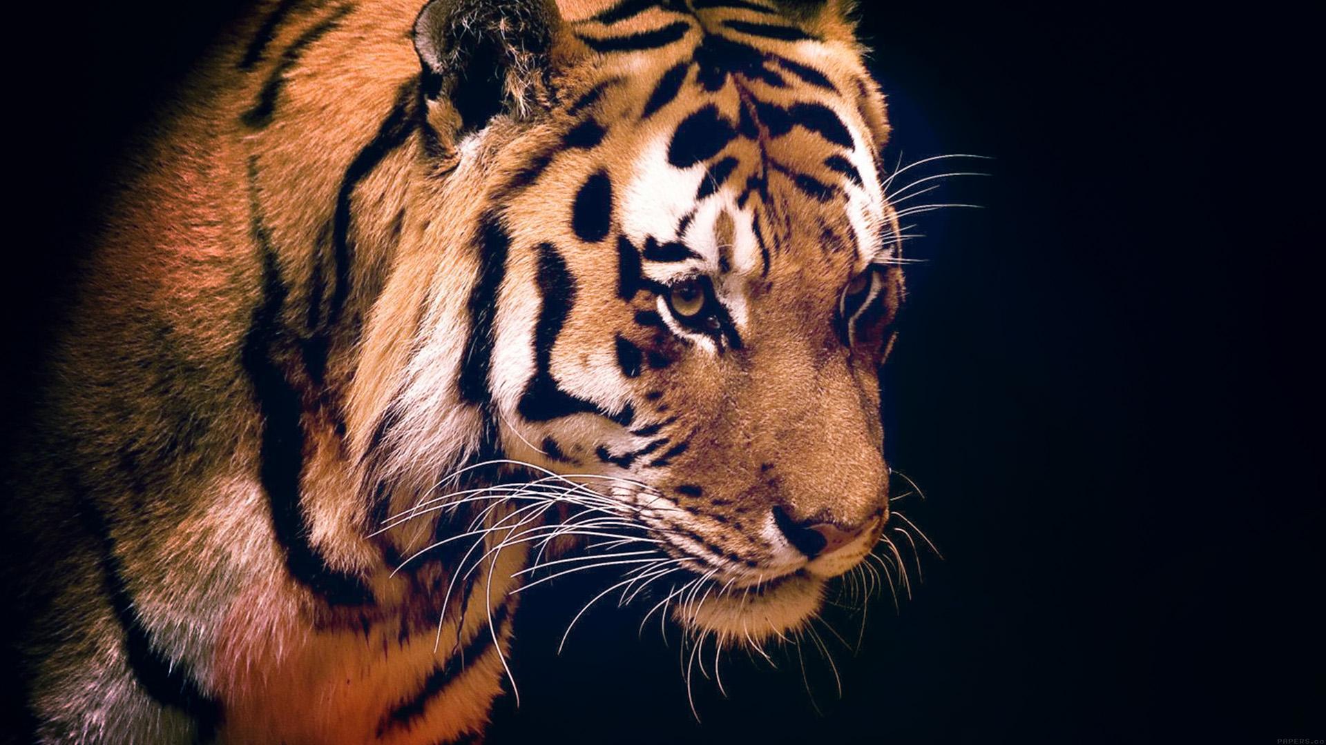 Fall Desktop Wallpaper For Mac Mm82 Tiger Dark Animal Love Nature Wallpaper
