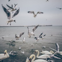 Beach with Seagulls Wallpapers