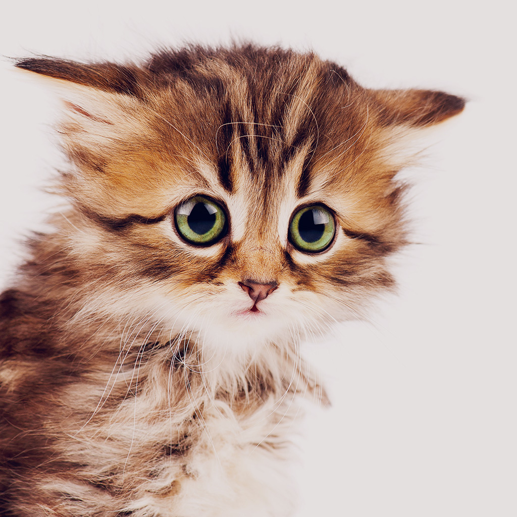Cute Little Kitten Desktop Wallpapers Ms23 Sad Kitten Cat Animal Nature Cute Papers Co