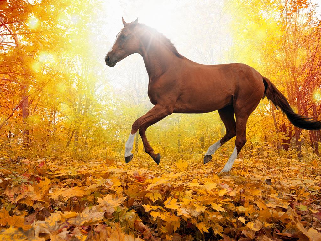Download Fall Wallpaper For Laptops Wallpaper For Desktop Laptop Mt30 Horse Art Animal Fall