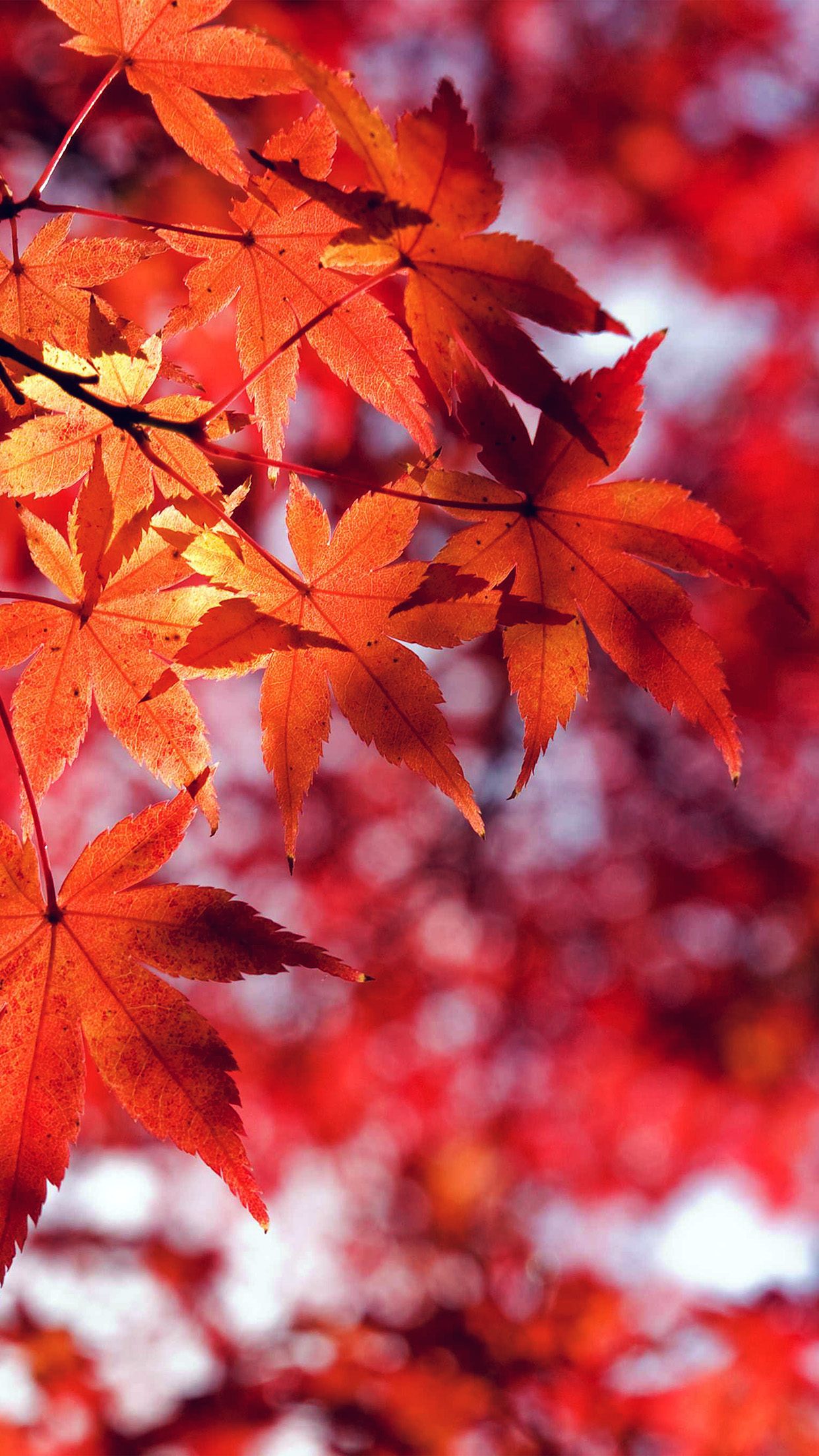 Falling Leaves Wallpaper For Iphone Mt33 Fall Leaf Red Mountain Bokeh Papers Co