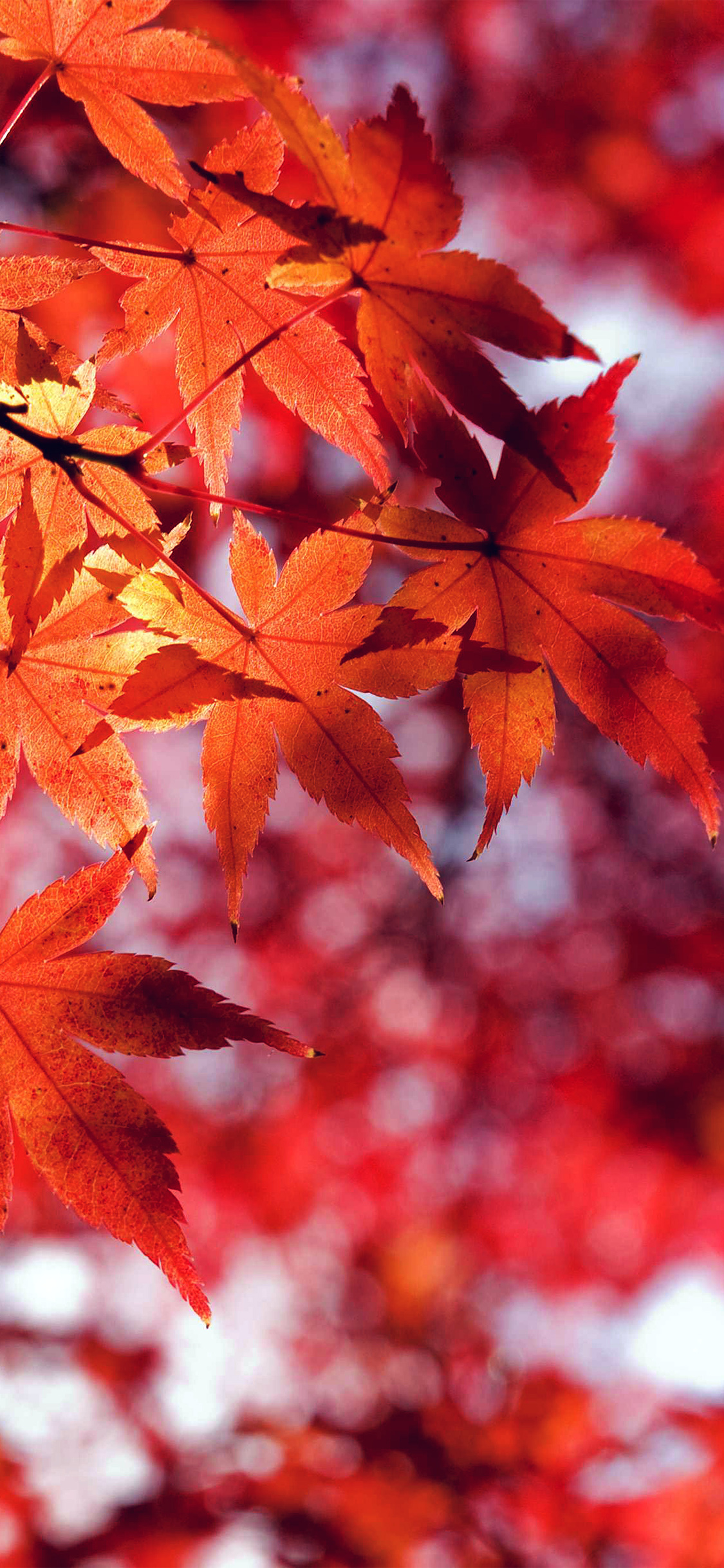 Fall Iphone 5 Wallpaper Hd Mt33 Fall Leaf Red Mountain Bokeh Papers Co