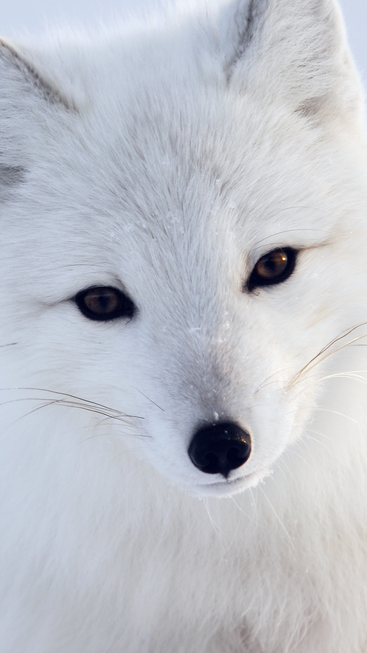 Cute Baby With Rain Wallpapers Papers Co Iphone Wallpaper Mu16 Artic Fox White Animal