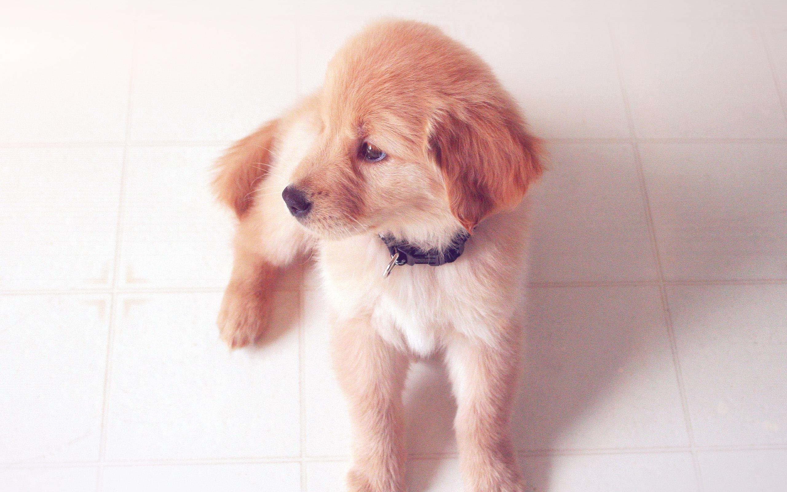 Cute Dog Wallpapers Fot Google Mv00 Puppy Love Cute Animal Nature Sitting Dog Blue Wallpaper
