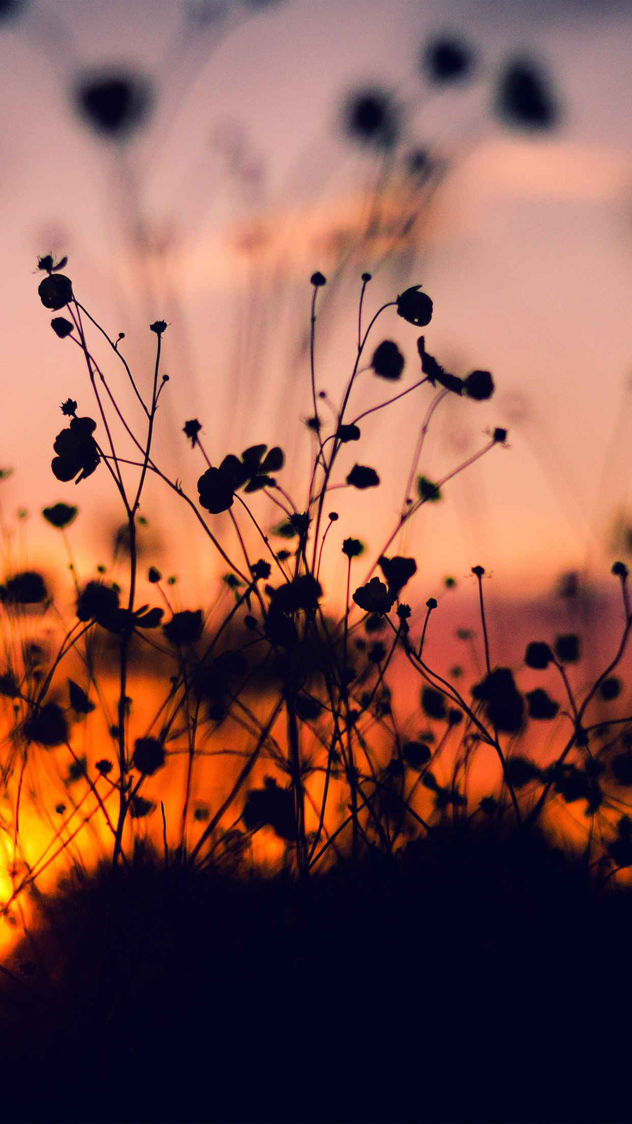 Fall Fields Wallpaper For Iphone Papers Co Iphone Wallpaper Mv64 Night Nature Flower