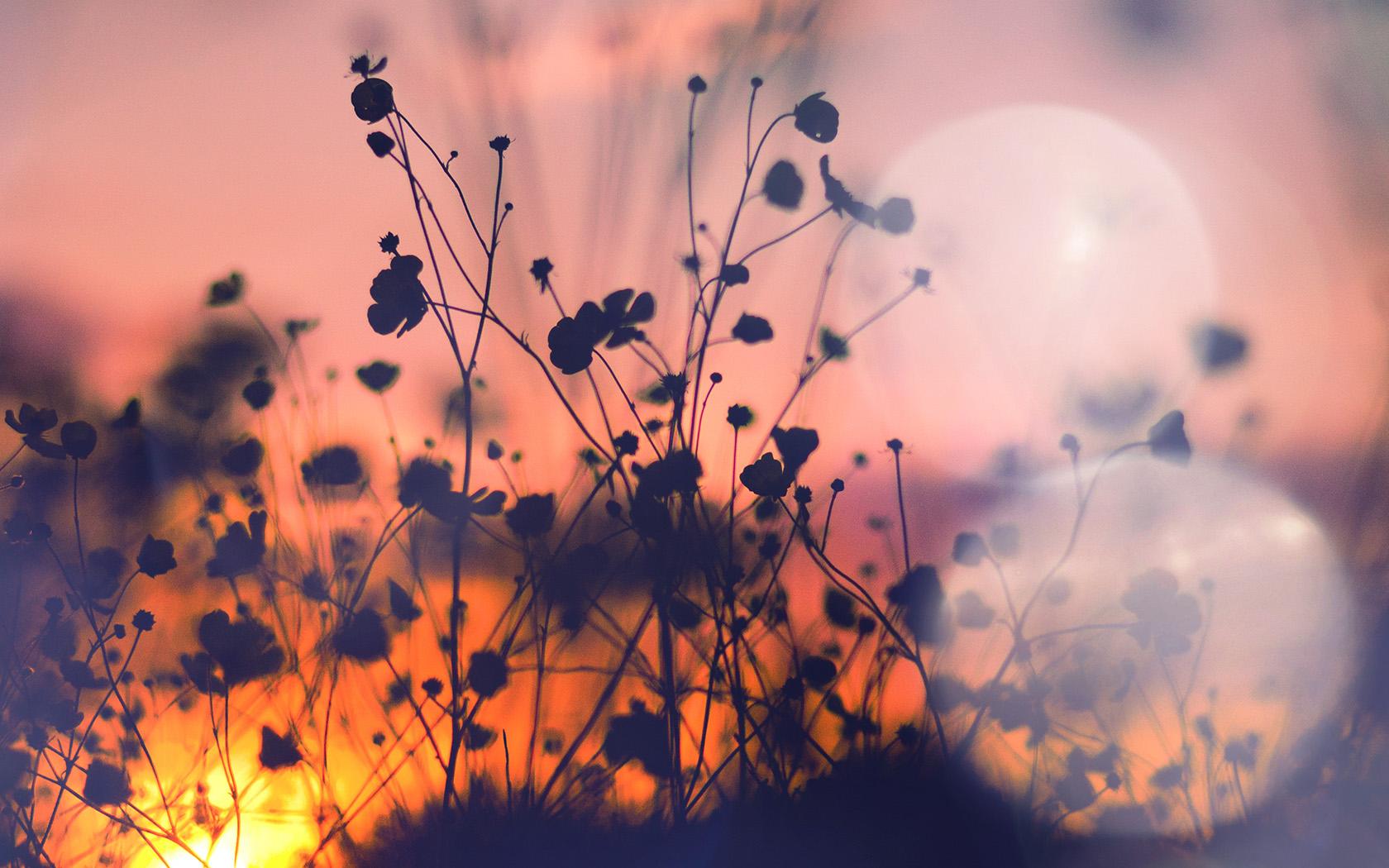 Cute Floral Wallpaper Wide Wallpaper For Desktop Laptop Mv66 Night Nature Flower