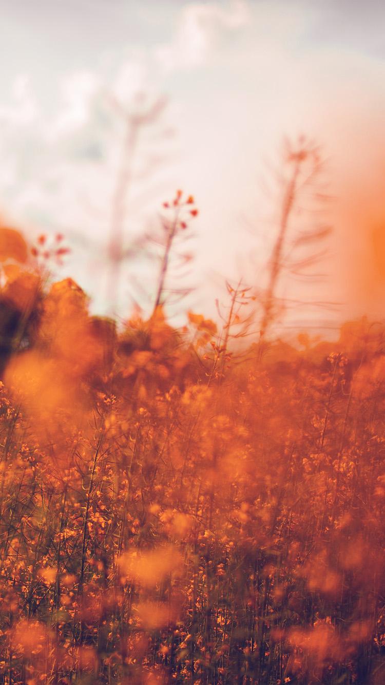 Iphone 6 Orange Flower Wallpaper I Love Papers Mw21 Nature Orange Flower Bokeh Spring Happy