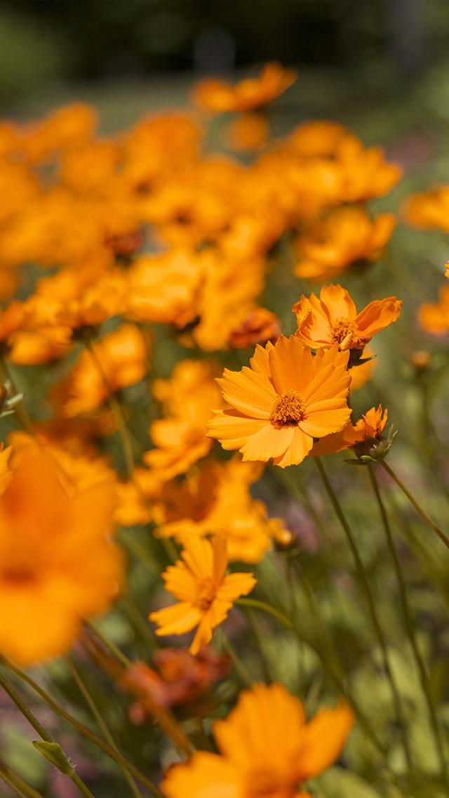 Rain Fall On Flowers Wallpaper Freeios7 Mx00 Flower Orange Zoom Bokeh Summer Delight