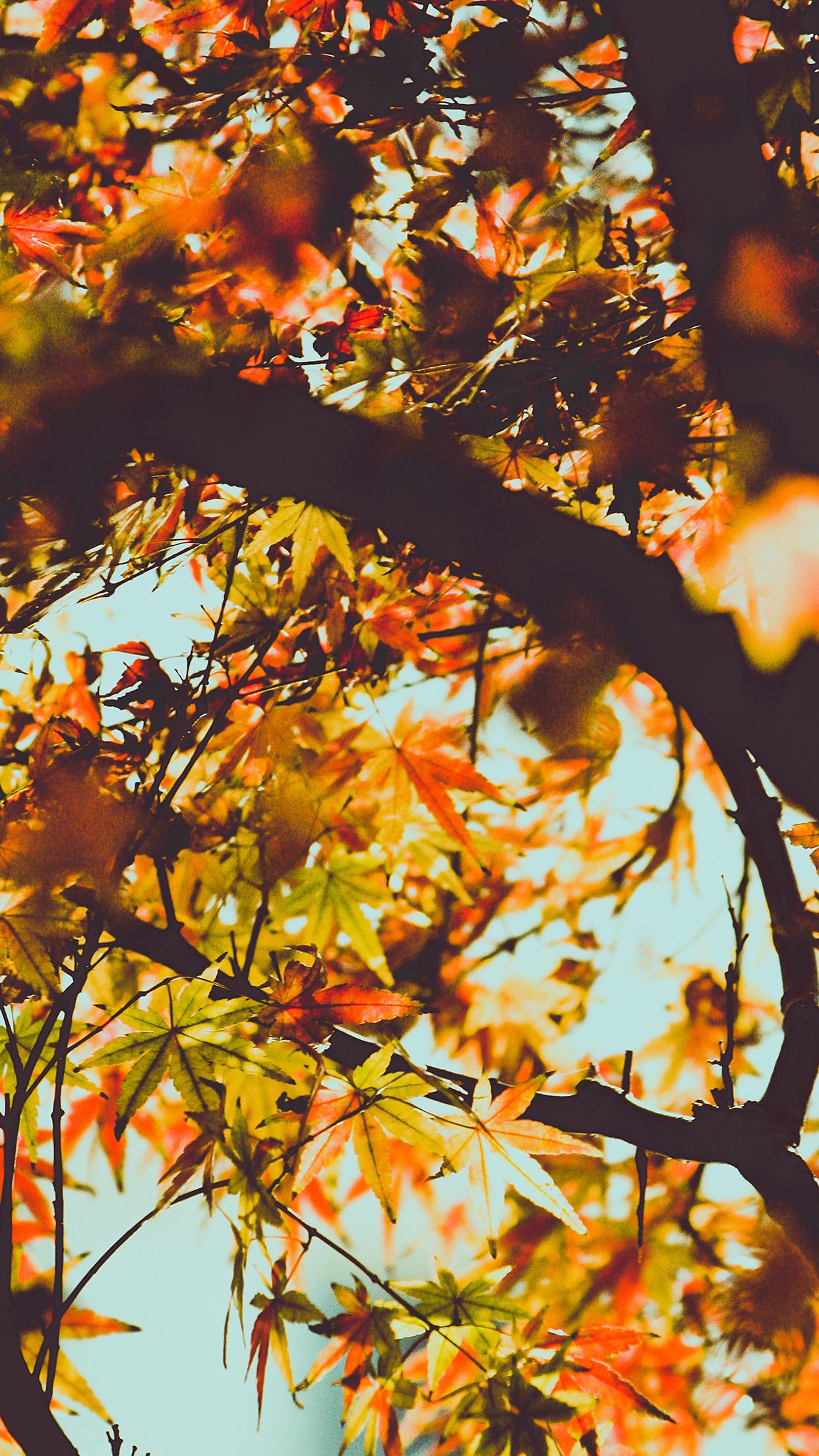 IPhone Wallpaper Mx12 Fall Tree Leaf Autumn