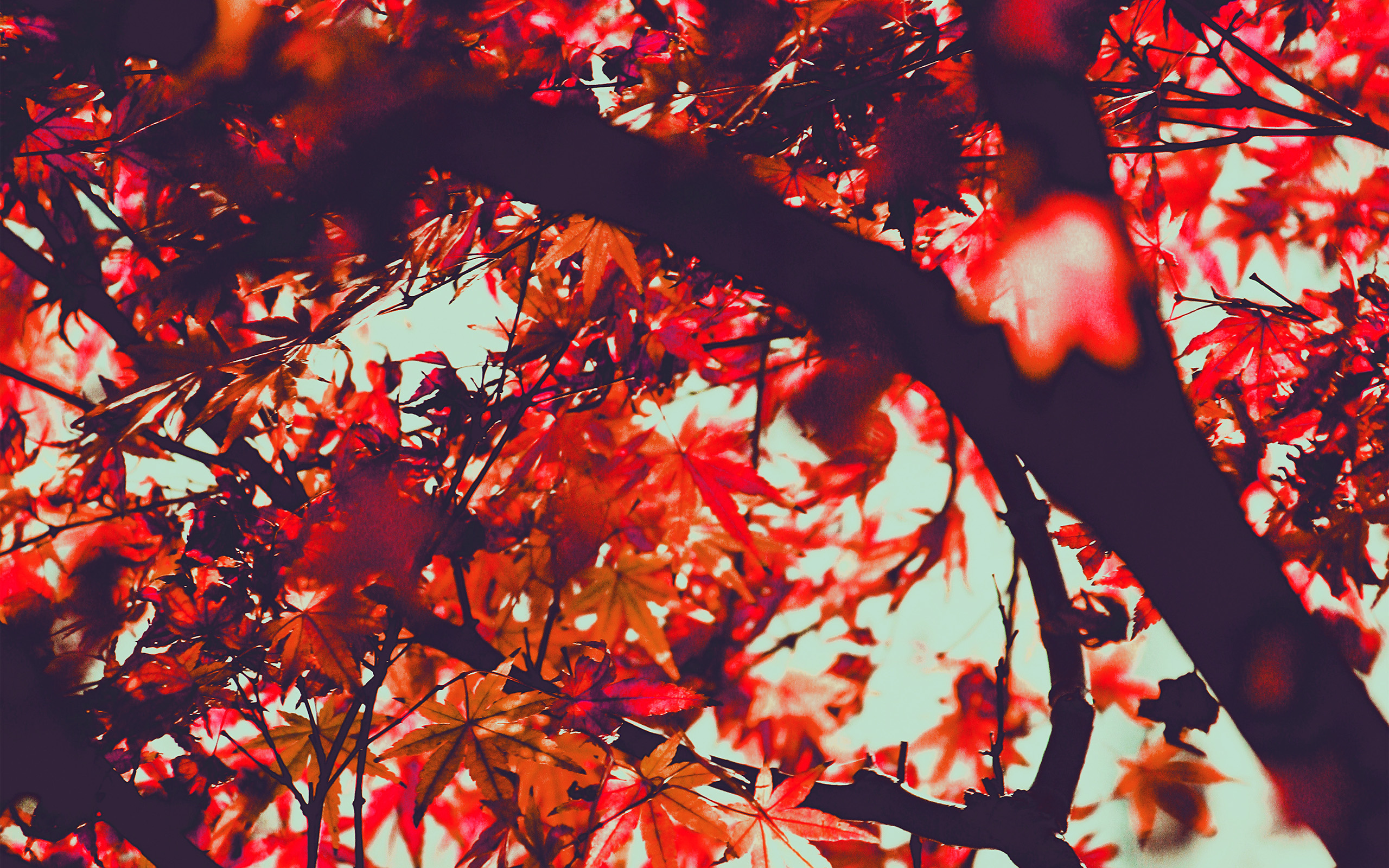 Fall Wallpaper For Laptops Wallpaper For Desktop Laptop Mx13 Fall Tree Leaf Autumn