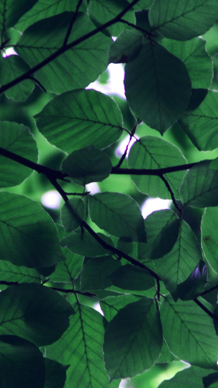 Fall Leaf Pattern Wallpaper Ipad