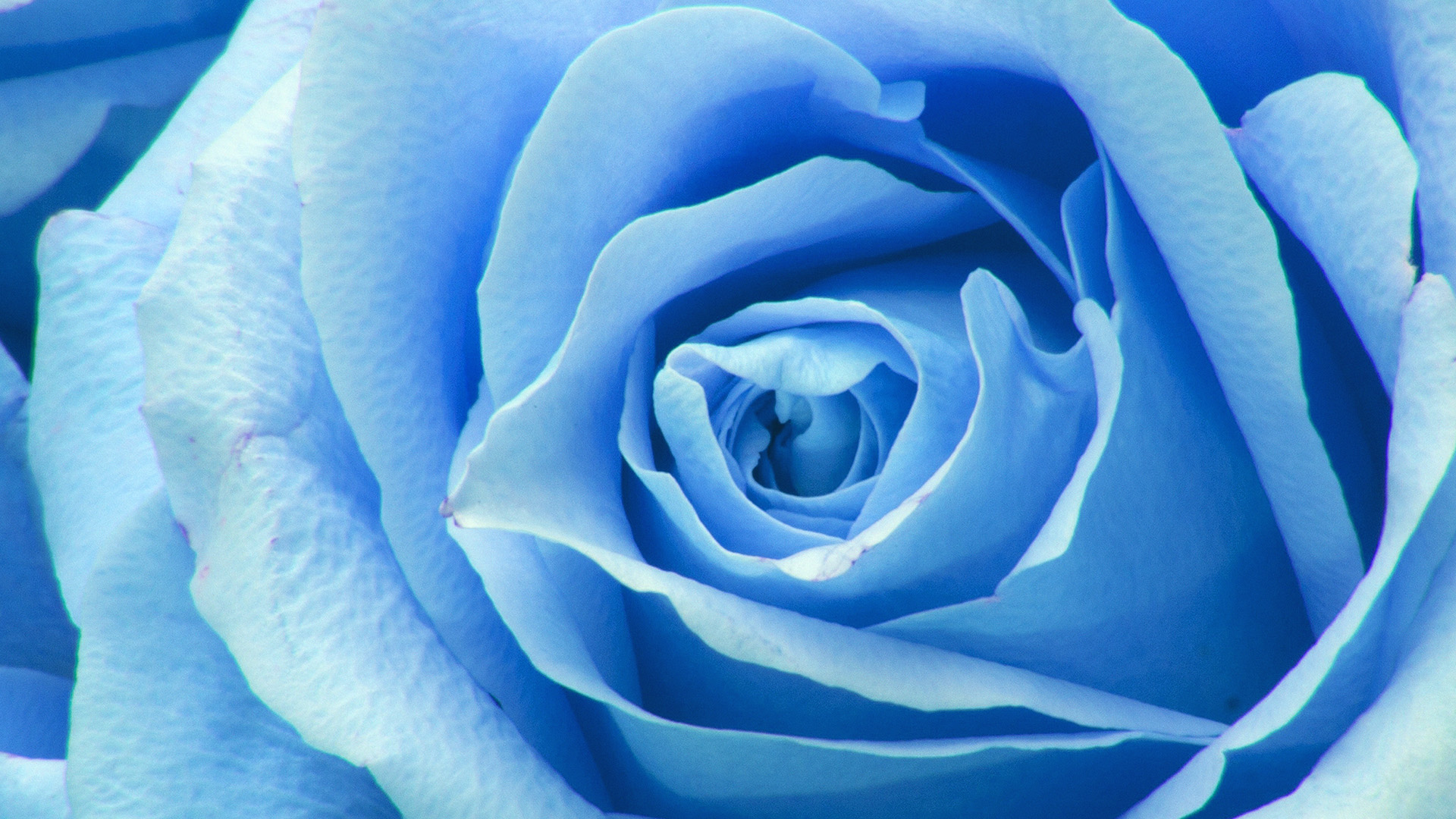 Fall Texture Wallpaper Ne44 Flower Blue Rose Zoom Love Wallpaper