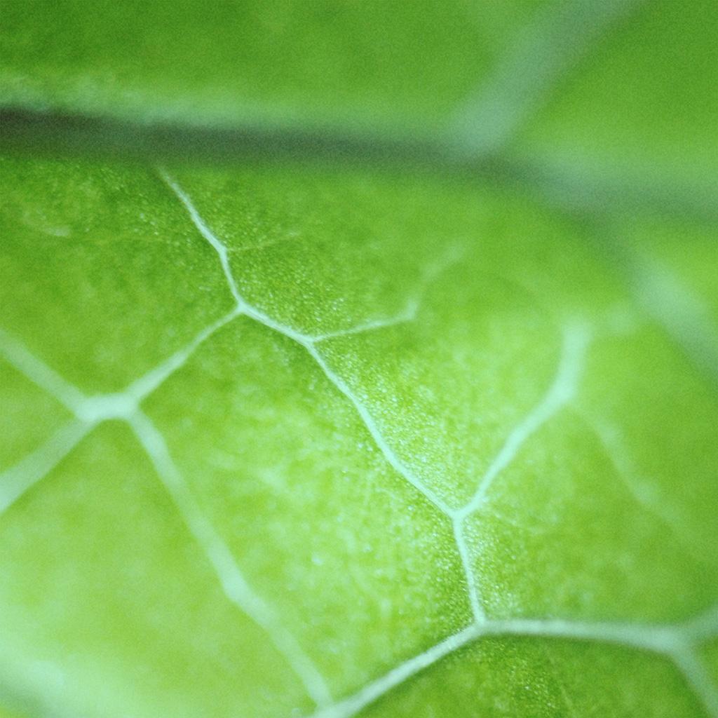 Art Car Wallpaper Nl26 Leaf Zoom Green Nature Bokeh Wallpaper