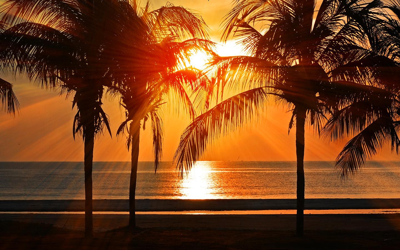 Beach Sunset Hawaii Tropical Flowers