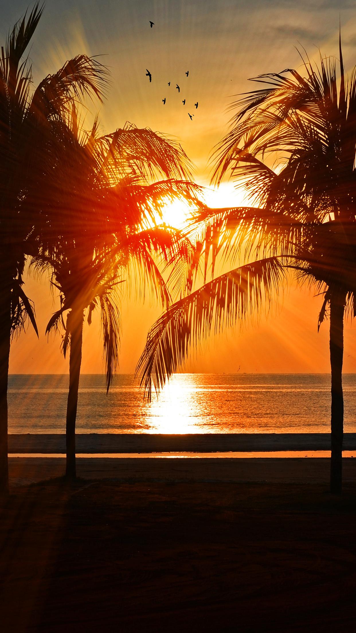 Nl74 Beach Vacation Summer Night Sunset Red Palm Tree