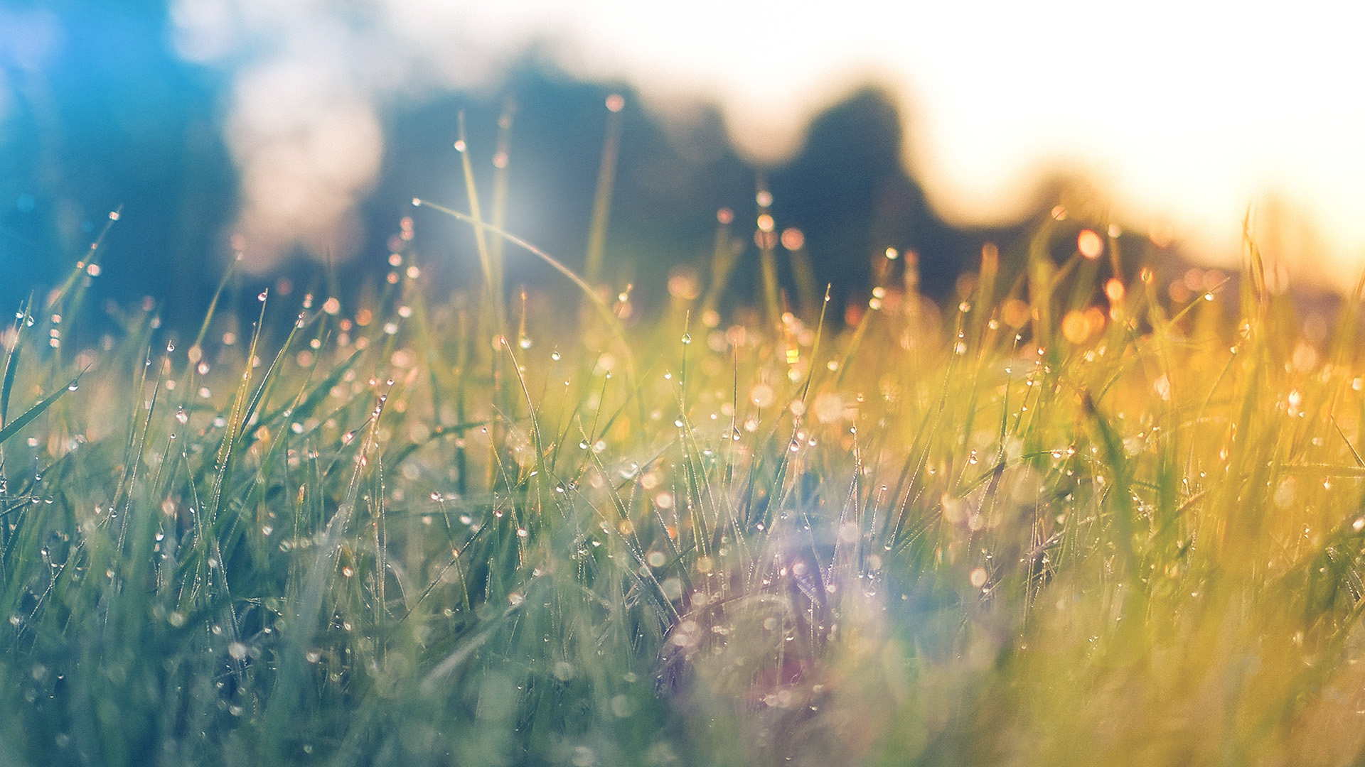 Fall Wallpaper Macbook Air Nm68 Lawn Green Nature Sunset Light Bokeh Spring Flare