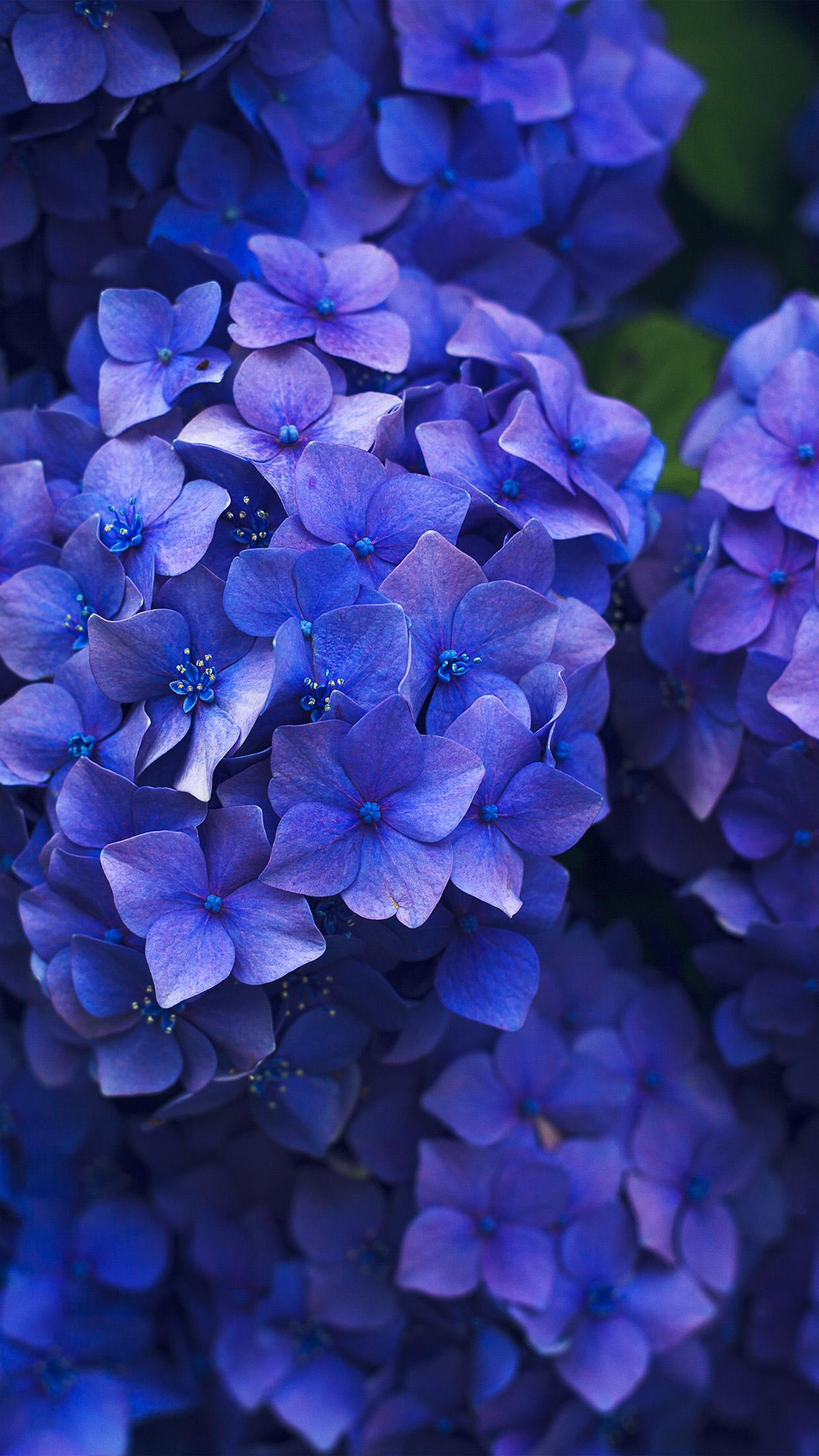 Spring Iphone 6 Wallpaper Nr08 Flower Spring Blue Purple Nature Wallpaper