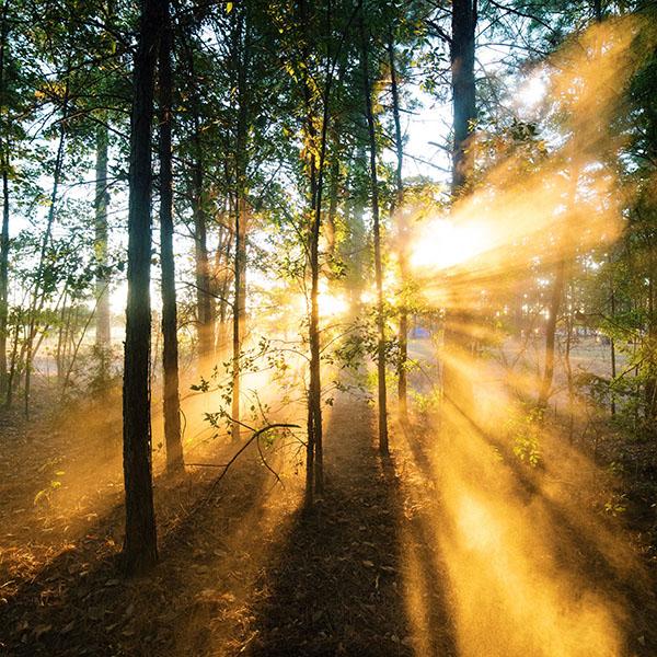 Iphone X Parallax Wallpaper Nr18 Forest Wood Light Sun Summer Nature Wallpaper
